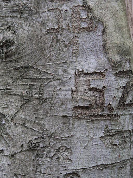 Der Baum als Blatt